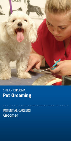 Program - Pet Grooming