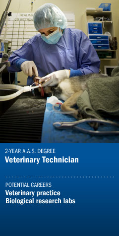 Program - Veterinary Technician
