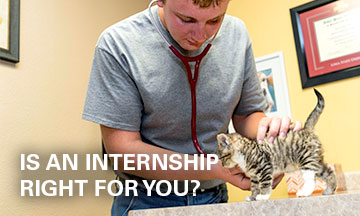 Is an internship right for you?